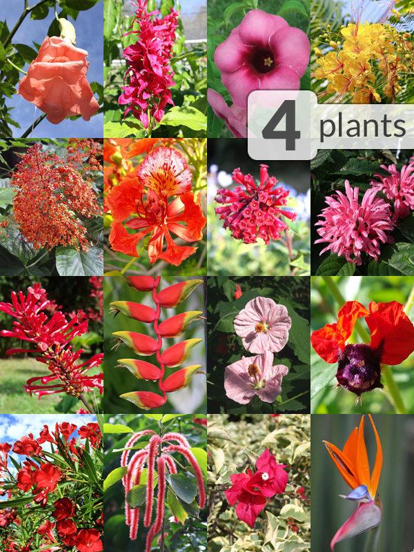 4 Flowering Patio Plant Sampler For Zone 9 10 Kens Nursery